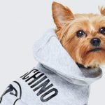 More fashionable animals than ever thanks to Moschino and H&M