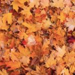 Autumn colors on nails: the 4 Deborah proposals
