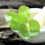 Centella asiatica: the benefits beyond the fight against cellulite