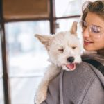 Dogs obey women more: a search says it