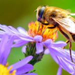 What is anaphylactic shock and what are the symptoms