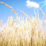 Grass allergy: symptoms and treatment