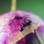 Plants: how to eliminate ants naturally