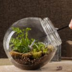 Micro gardens: all the secrets of this new green trend