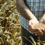 Ancient grains: what they are, benefits and why use them
