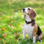 Danger sepsis: don't let dogs and cats lick you in the face