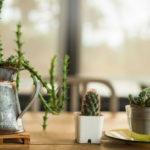Home succulents: how to cure them easily and naturally