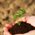 Natural fertilizers: here's how to make them