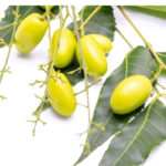 Neem oil: perfect and mosquito-proof skin