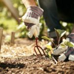 Sustainable gardening: 5 tips for having a green thumb