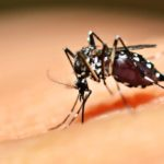 Zika, a group of researchers has discovered powerful antibodies