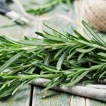 Rosemary: healing properties and how to grow it