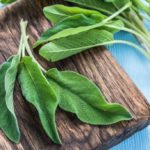 Sage: do you know its healing properties and how to grow it?