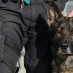 Tribute to the dog-hero, who died to save the policeman