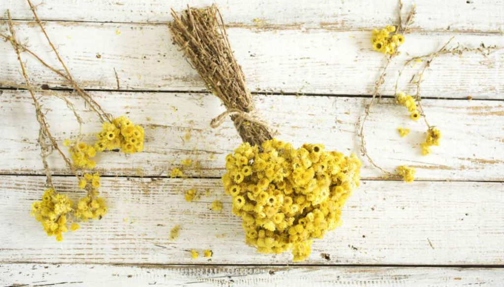 Beautiful and healthy skin? Try the helichrysum essential oil
