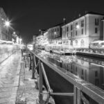 Feline Milan: a park tailored for cats will be born on the Navigli