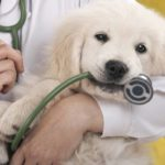 First aid for four-legged friends? In Sardinia there is
