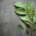 Laurel: all the beneficial properties and how to grow it