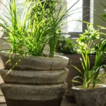 Plants that purify the air