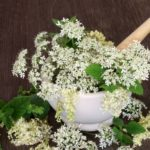 Strong immune system with angelica essential oil
