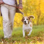 What to give to those who love their dog more than themselves