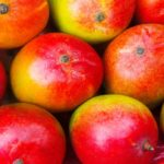 Mango against obesity: properties and contraindications
