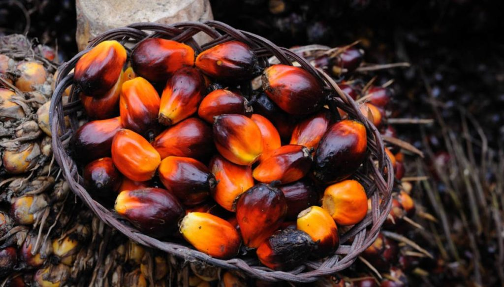 Choose products without palm oil