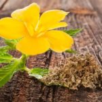 Damiana to improve digestion and control appetite