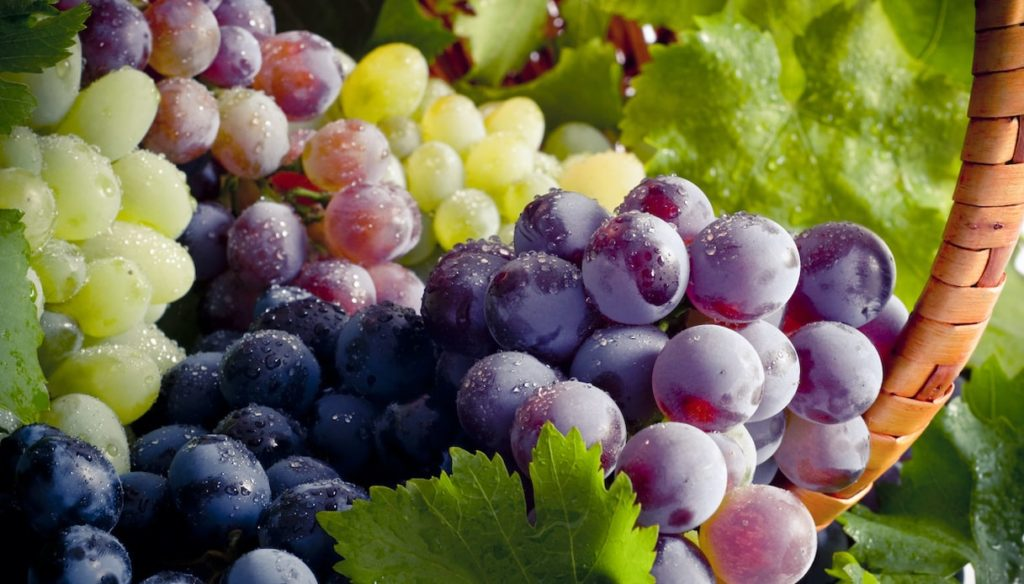Diet with grapes: antioxidant and anti-inflammatory
