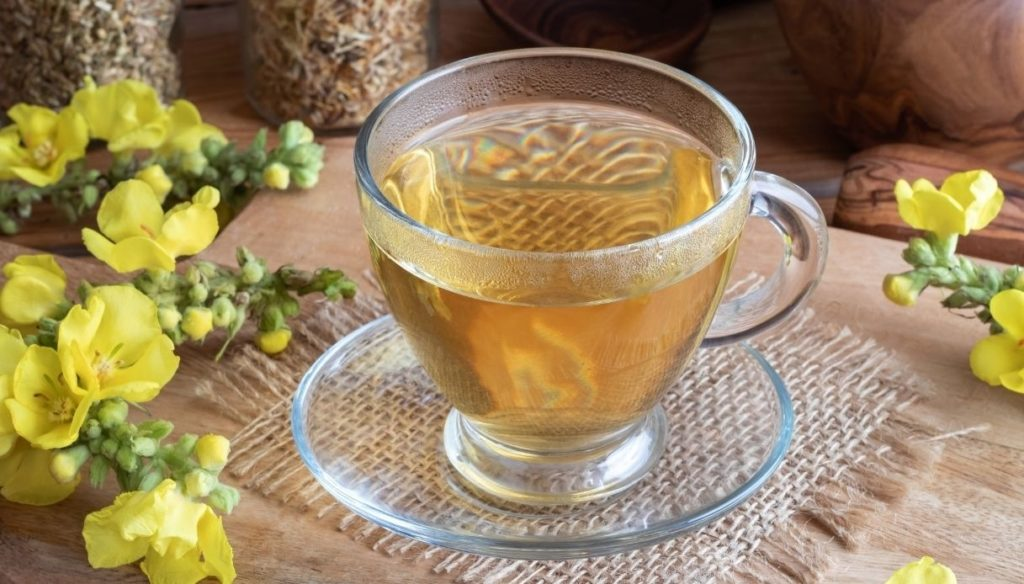 Mullein tea, anti-inflammatory and rich in vitamins