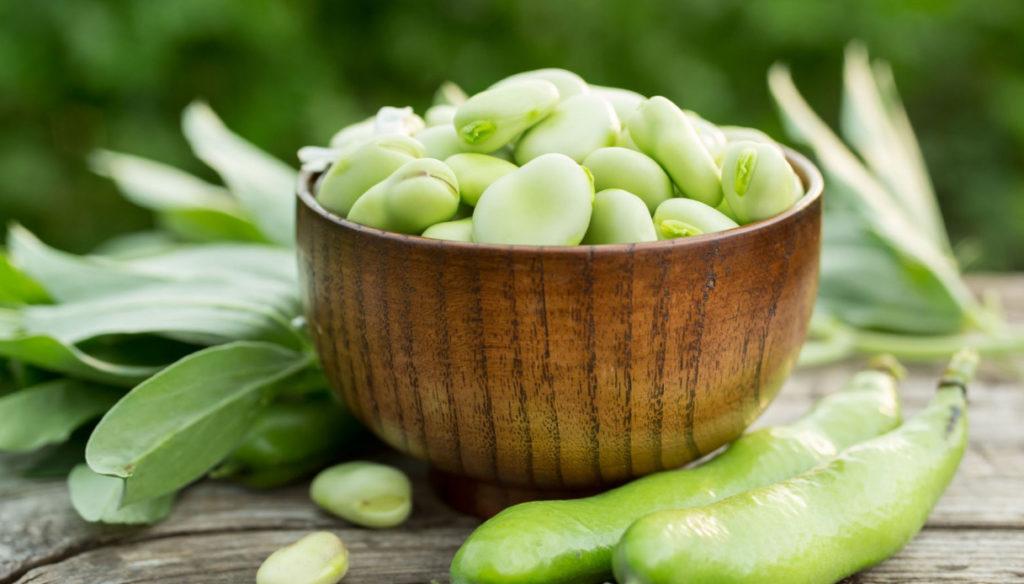 Broad beans, the special legumes that protect the brain