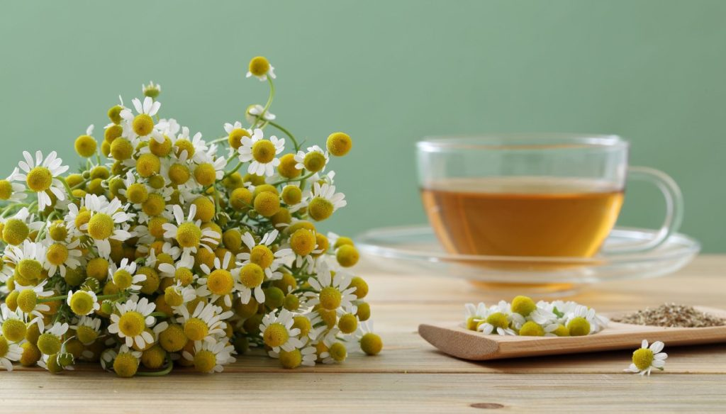 Chamomile: the sweet and effective remedy for well-being and relaxation