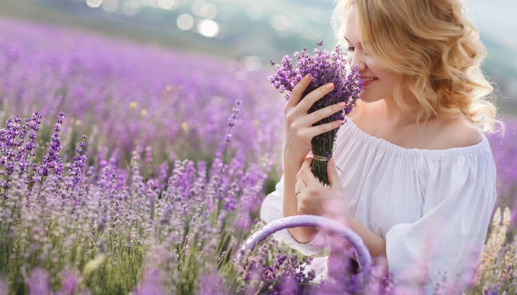 Lavender: a fragrant and ancient remedy for well-being