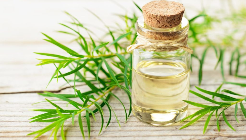 Tea tree oil: how to use it and what it is for