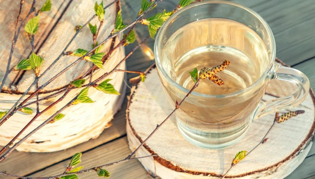 Birch sap: how to use it and what it is for