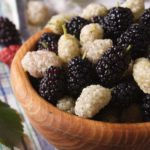 Mulberry blackberries: properties, benefits, period and contraindications