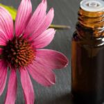 Echinacea: benefits, uses and supplements