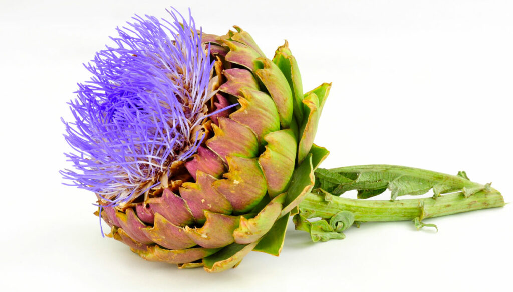 Inulin, the prebiotic fiber that helps you lose weight