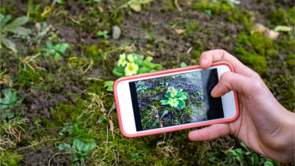 Best apps for recognizing plants and flowers