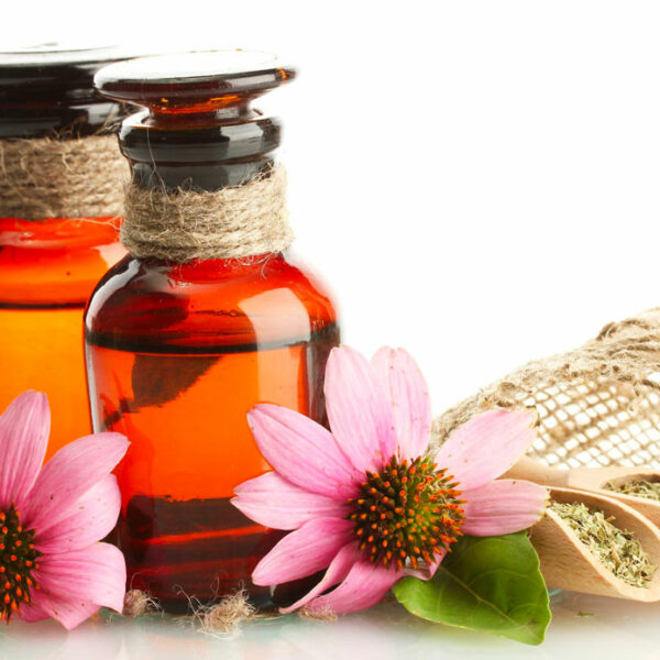 Echinacea: the natural ally for the well-being of the respiratory tract