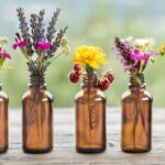 Phytotherapy: what it is and what it cures