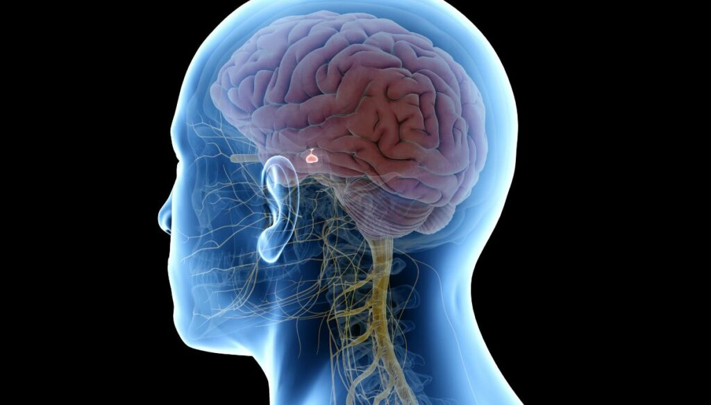 Pituitary tumors: what they are, symptoms and treatment