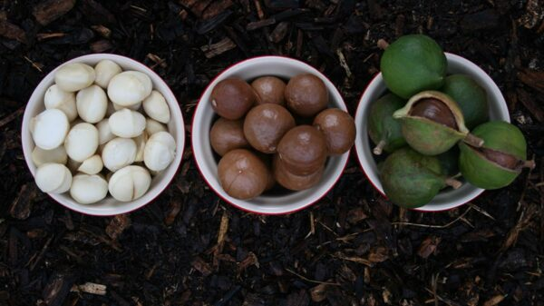 Macadamia Oil: Here's why you should add it to your beauty routine