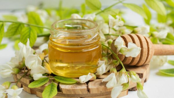 Acacia: what it is, properties and benefits