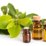 Camphor: what it is, what it is for and how to use it
