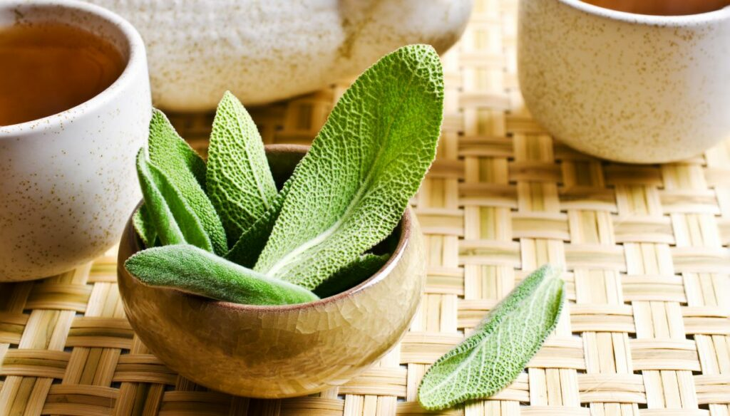 Sage: properties, benefits and uses